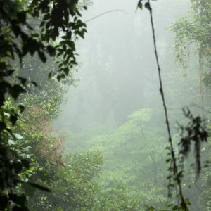 Monteverde cloud forest reserve i Costa Rica.
