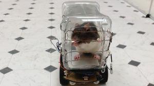 En råtta i en plastburk ovanpå ett litet hjulförsett motorfordon. Råttan lär sig att köra bil i utbyte mot möjligheten att nå fram till frukostflingor.