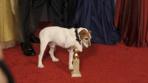 uggie the dog på golden globe awards
