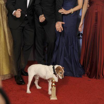 uggie the dog på golden globe awards