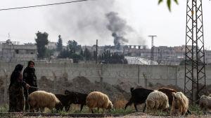 Naiset ulkoiluttavat lammaslaumaa Turkin-rajan tuntumassa Syyriassa.