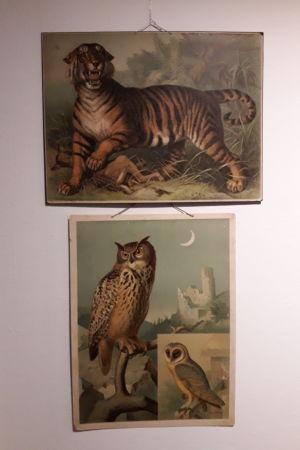 En tiger och en berguv på gamla skolplanscher.