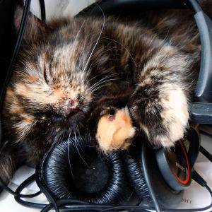 Katten tar en lur, eller ja två.