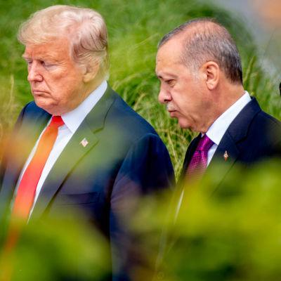 Donald Trump och Recep Tayyip Erdogan går sida vid sida i en lummig trädgård i Bryssel juli 2018.