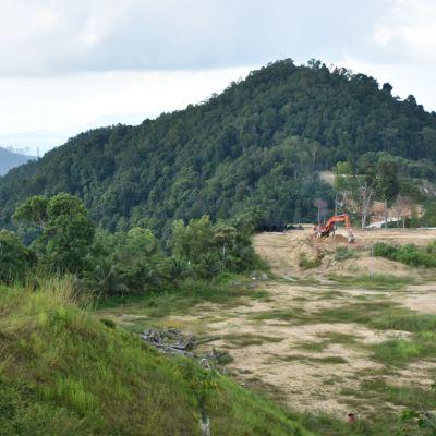 Utan tillstånd har regnskogen skövlats på toppen av en ås. Marken jämnas så att den lämpar sig för en durianodling.