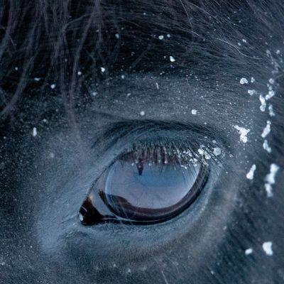 Hevosen silmä