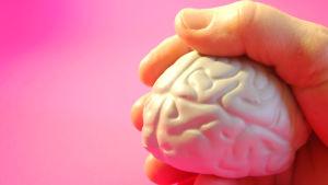 Käsi pitelee aivoja