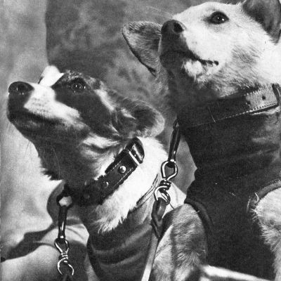 Belka ja Strelka -koirat