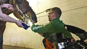 Eläinlääketieteen kandi Ilkka käsi hevosen suussa