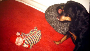 Pieni vauva nukkuu kädet nyrkissä parisängyllä, vieressä iso rottweiler katselee vauvaa.