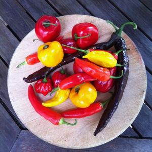 Puisella tarjottimella runsas lajitelma erilaisia chilipippurin hedelmiä.