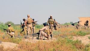 Första försöket att storma Falluja misslyckades då irakiska regeringsstyrkor slogs tillbaka i jihadisternas motattack i stadens södra utkanter