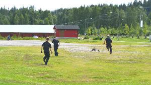 tre män jagar gås