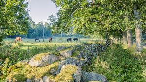 Stenmur med mossa, en trädallé och en hage med hästar som betar.