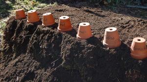 Ett trädgårdsland där man använder terrakottakrukor för att markera vad som odlas.