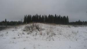 Puisto istutetaan maanläjitysalueelle Karhunmäessä.