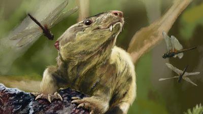 Bonacynodon schulzi, ett av däggdjurens tidiga föregångare från trias-perioden.