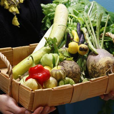 Vihanneksia korissa.