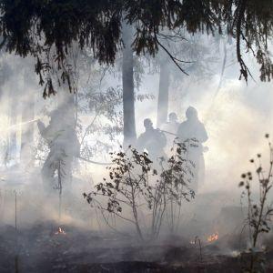 Brandbekämpning 15 km från Moskva den 5 augusti 2010.