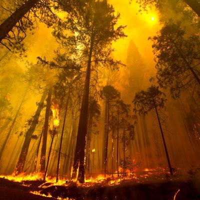 Skogsbrand.