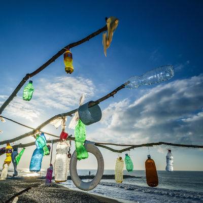 Puunoksiin kiinnitettyä muoviroskaa rannalla.