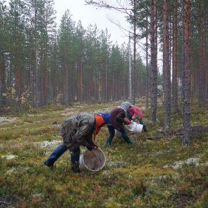thailändska bärplockare i Finland