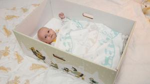 Baby vilar i den nya mammalådan 2015.