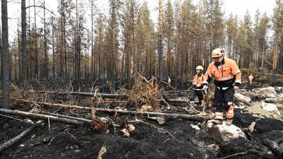 Brandmän i Kalajoki går runt i nedbränd skog.