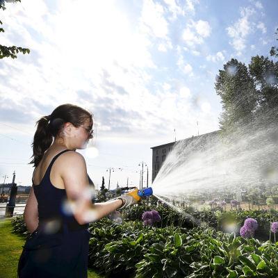 Työntekijä  kastelee kasveja Esplanadn puistossa.