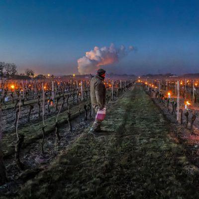 Loiren laaksossa Saint Nicolas de Bourgueilissa sijaitsevalla viinitarhalla sytytettiin soihtuja ja hiilipannuja köynnösten väliin