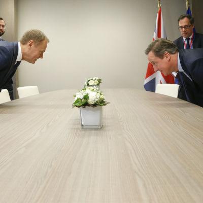Europeiska rådets ordförande Donald Tusk och Storbritanniens premiärminister David Cameron.