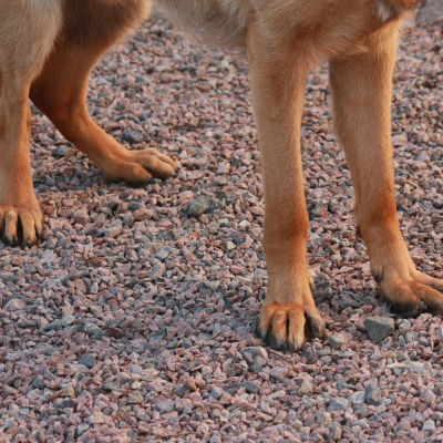 ett par bruna hundtassar.