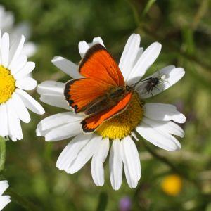 Fjäril och blomma.