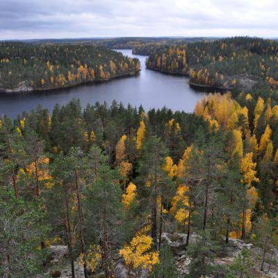 Syksyinen järvimaisema Repoveden kansallispuistossa.