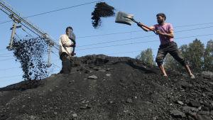 Indiska arbetare lastar kol på lastbilar.