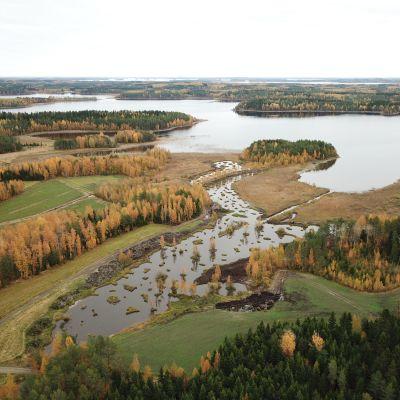 Heinälammin alueen kosteikko lokakuussa 2019.