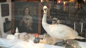 En uppstoppad svan i ett julfönster.