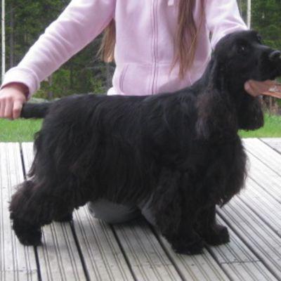 Koira, jonka takana tyttö pitää koiraa leuan alta ja hännästä.