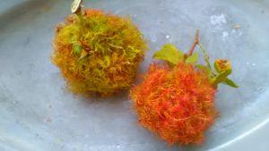 Två bollar i orange och grönt, som liknar mossa, med grenar av rosor.