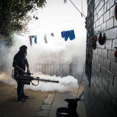 Anställd vid El Salvadors hälsoministerium sysselsatt med myggbekämpning.