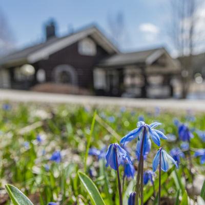 Kesämökki ja kukkia etualla