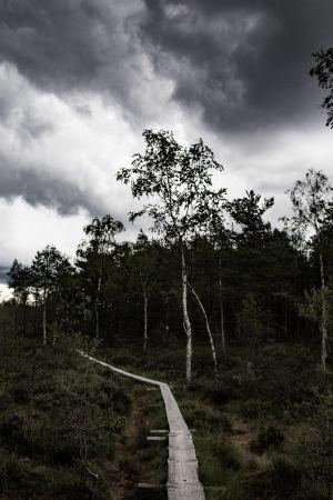 Tummat pilvet nousevat pitkospuureitillä