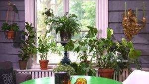 Krukväxter i ett fönster