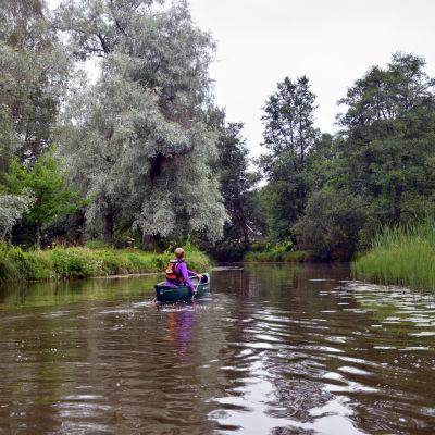 En person paddlar i en kanot på en å.