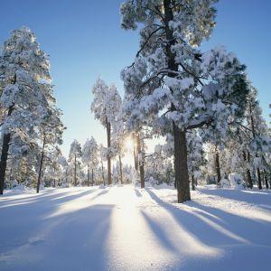 En skog på vintern i soligt väder