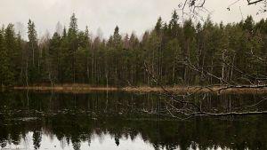 En tjärn i skog som syns på andra sidan. Lite is på ytan.