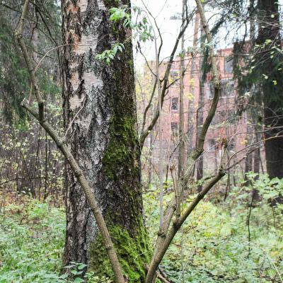 skog och i bakgrunden höghus
