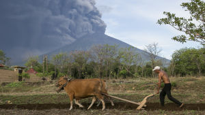 En bonde i förgrunden, vulkanberget Gunung Agung som spyr ut aska i bakgrunden.