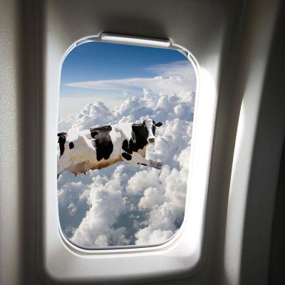 Vy ut från ett flygplansfönster där en ko precis flyger förbi.