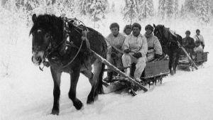 En häst drar en släde med soldater i vinterkriget.